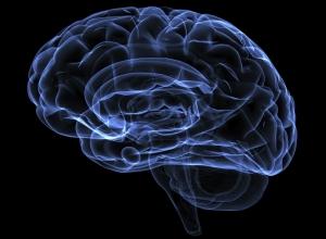 Resultados inéditos e promissores: Investigadores em Portugal recriam zonas do cérebro em laboratório
