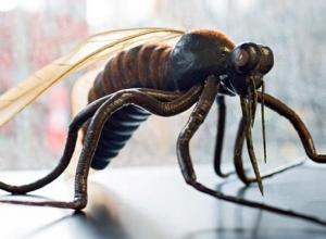 Pragas de insetos que transmitem doenças podem aumentar com alterações climáticas