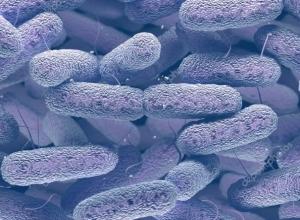 Enterobactérias resistentes ao carbapenemos ameaçam a Europa